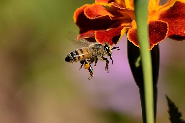 Ana Arının Kalitesini Etkileyen Faktörler